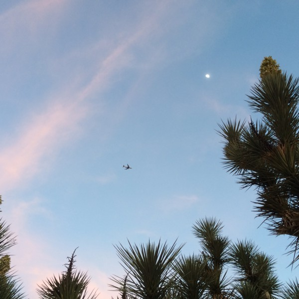 BA289 coming into Arizona in a beautiful sky with a moon and cactus.