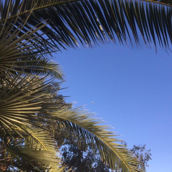BA289 - through the palm trees - ba289.com